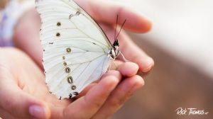 Warming Butterflies, or How to Treat Your Wife